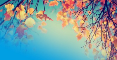 Gradient - Autumn Statement 2015 Will SMEs be impacted